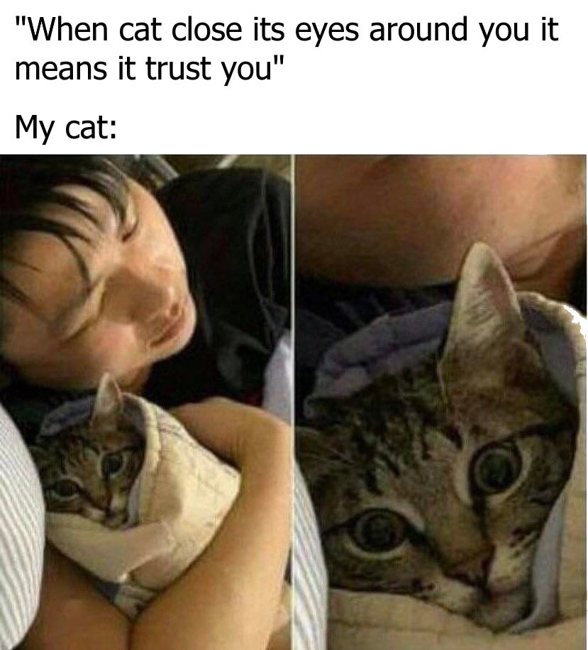 When a cat closes its eyes around you it means it trusts you